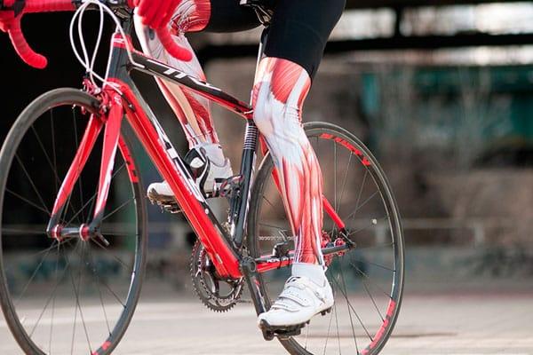 Músculos en el pedaleo